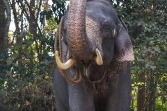 elephant bath